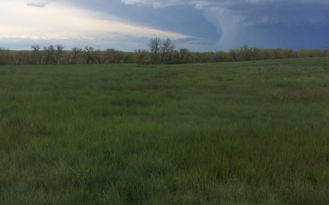 thunderstorm in the distance