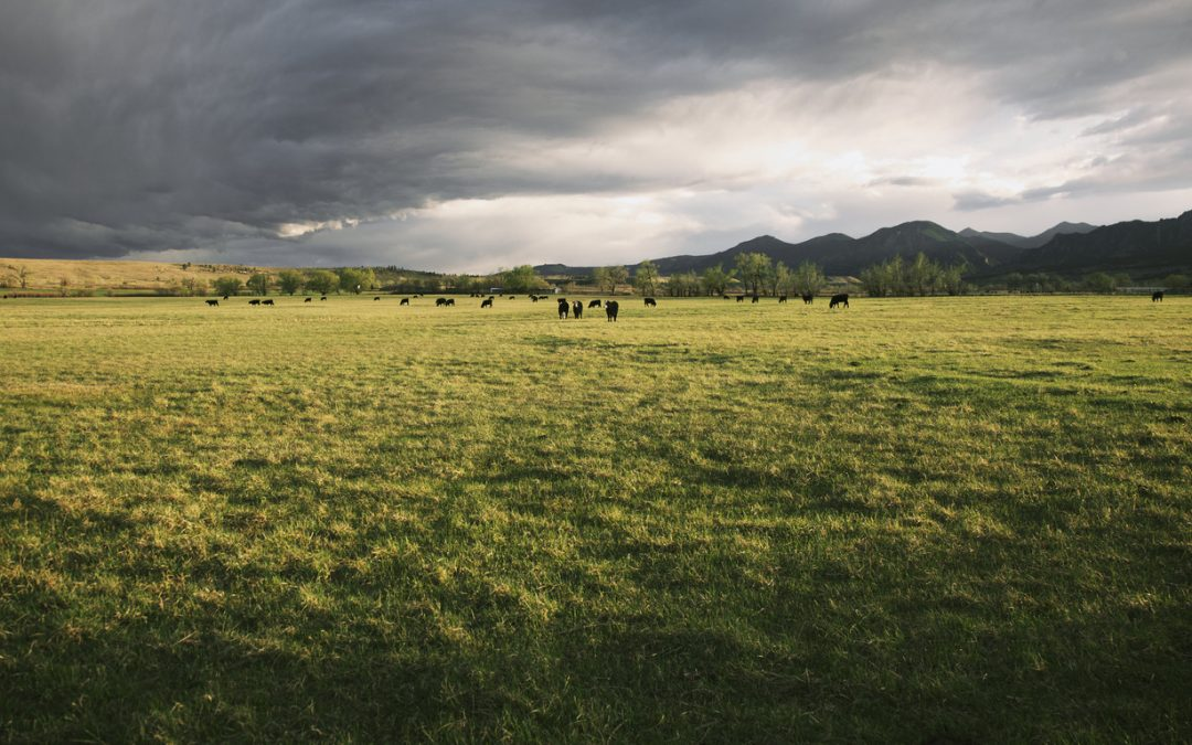 Improving Pastures and Soil with Holistic Management