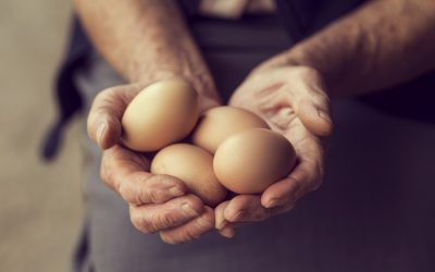 Why Customers Prefer Rafter W Ranch's Pasture-Raised Eggs