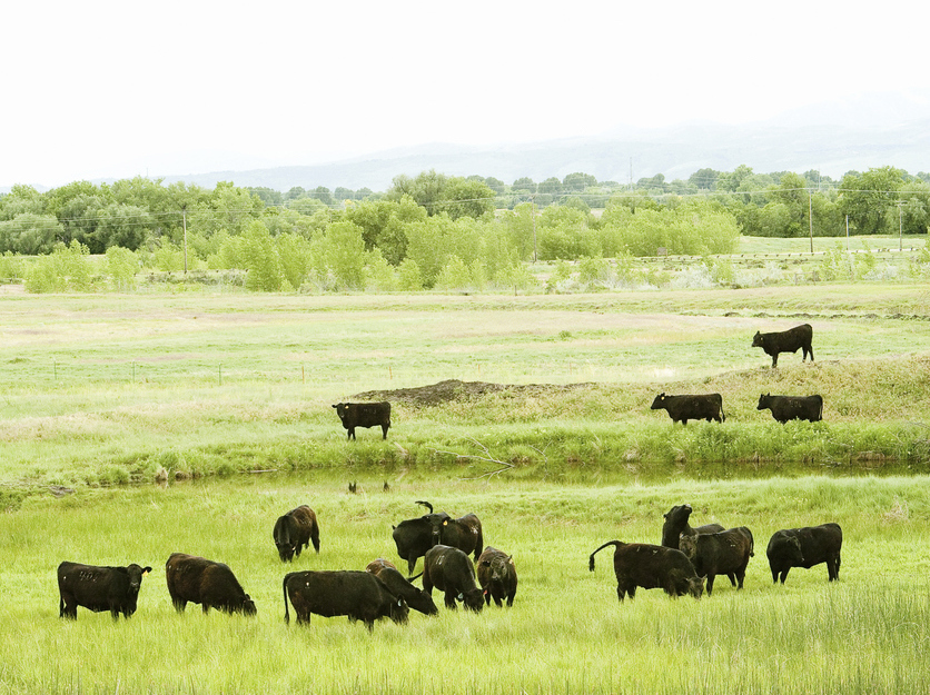 Green pastures and cows