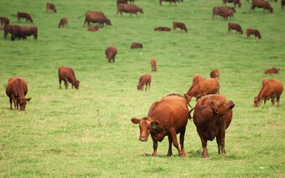 An Insider's Guide to Grass-Fed Beef