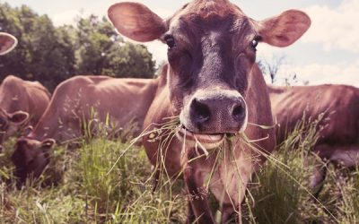 How Grass-Fed Helps the Environment