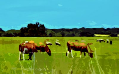 3 Reasons Why Rafter W Ranch is Your Hero for Grass-Fed Meat