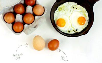 Pullet Eggs: A Chef's Secret Weapon